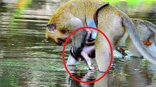 Omg! Broken heart baby crying until drop in the water Mum bring new baby play in water, What happen
