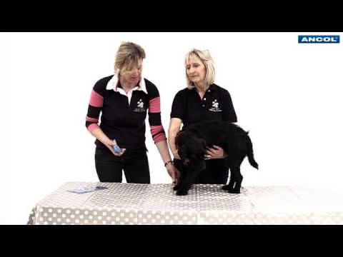 How to Trim Your Dog's Claws with Guillotine Clippers