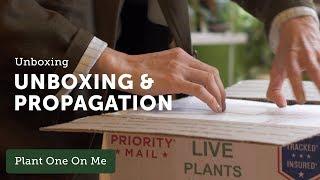 Ep 114. Houseplant Unboxing + Peperomia Propagation