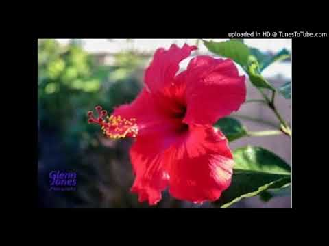 Sirba jaalalaa best love fandishee  Oromo music subscribe 10Q