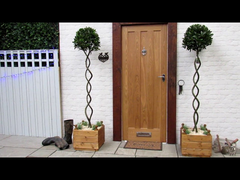 Bay tree double corkscrew Complete in Wooden Planters
