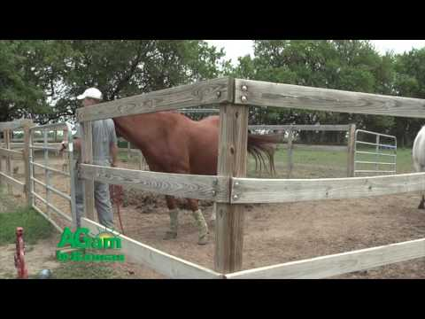 AGam in Kansas - Help Your Horse to Cool Down - October 6, 2016
