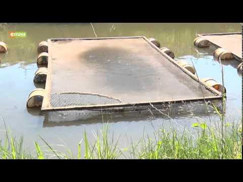 Smart Farm - Caged Fish Farming