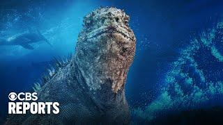 Adapt or Die: Exploring the Galapagos