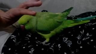 Download طوطی مهربان از دست ندهیدش Video