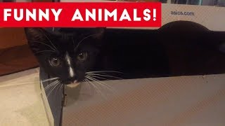 Funniest Pets of the Week Compilation August 2017   Funny Pet Videos