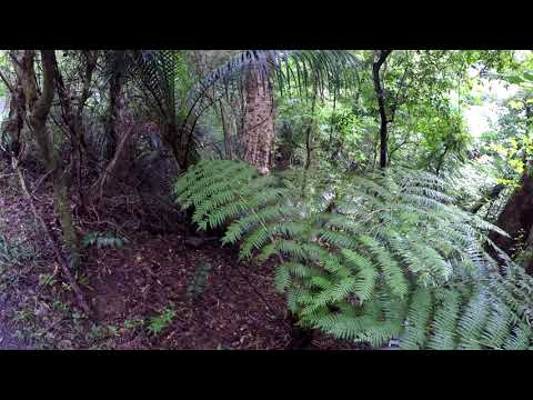 New Zealand 2018 Paihia School Road Track
