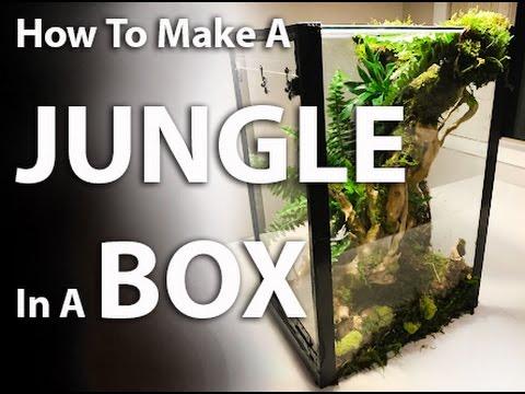 How to Make a Jungle In A Box  |   A Terrarium Tutorial