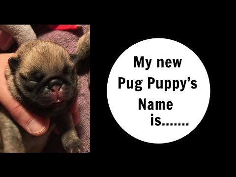 My new Pug Puppy's name is....