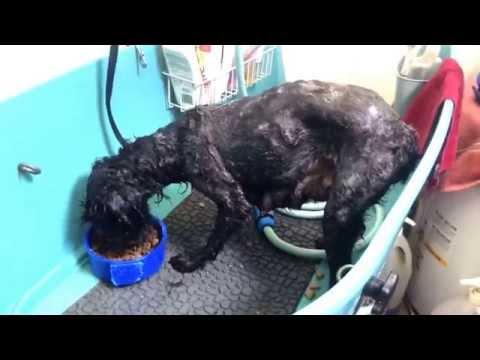 Momma dog getting flea n tick bath