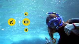 Sea Turtles | :15 | Expedia