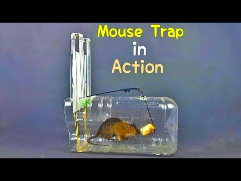How to Make a DIY Rat Trap at Home - Simple Humane Mouse/Rat Traps
