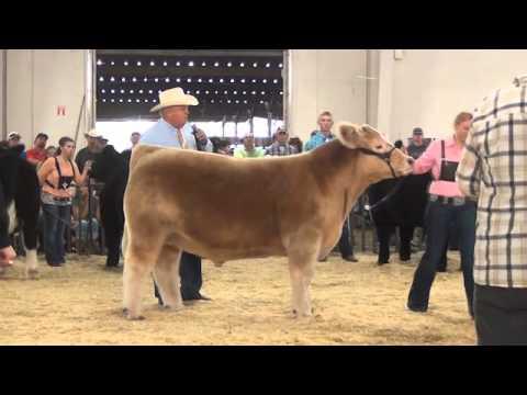 2014 Colorado State Fair Market Beef Show