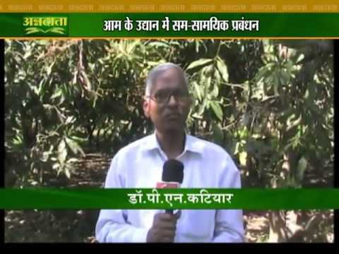 Know about how to take care of mango garden