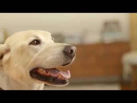 The Advantage Family: How to Tell if a Dog is Overweight or Obese?