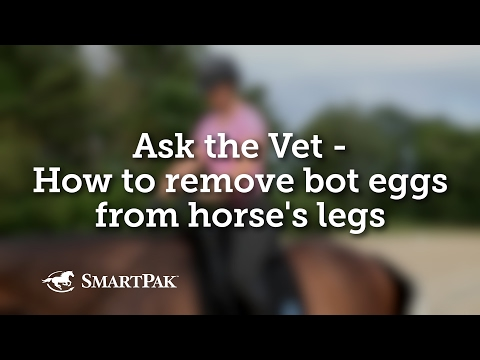 Ask the Vet - How to remove bot eggs from horse's legs