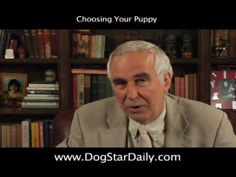 Choosing Your Puppy