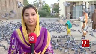 Hundreds of pigeons find abodes in Multan's Qila Kuhna Qasim Bagh   12 Oct 2018   92NewsHD