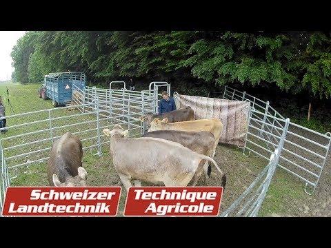«Bud Box»: Tiere sicher und schnell verladen