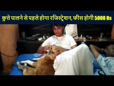 अब कुत्ते पालने से पहले होगा रजिस्ट्रेशन, फीस होगी 5000 रुपए