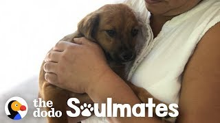 Download Couple Finds A Stray Puppy On Vacation | The Dodo Soulmates Video
