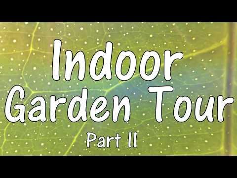 Indoor Garden Tour (Part II)