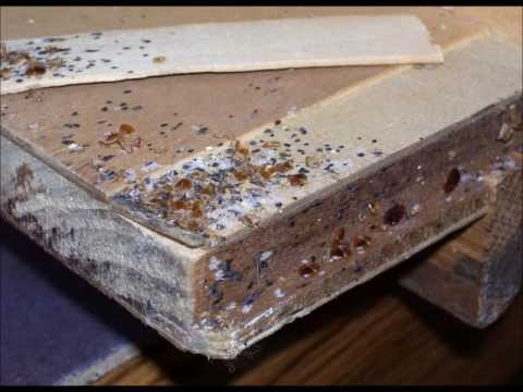 How To Get Rid Of Bed Bugs How To Get Rid Of Bedbugs How To Kill Bed