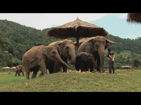 Assignment Asia: Thailand's elephant whisperer
