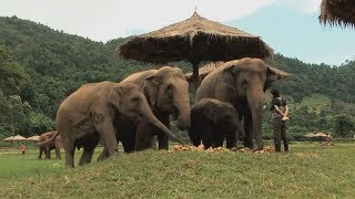 Assignment Asia: Thailand's elephant whisperer