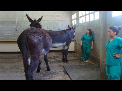 Xxx Mp4 Super Mura Donkey Meeting 3gp Sex