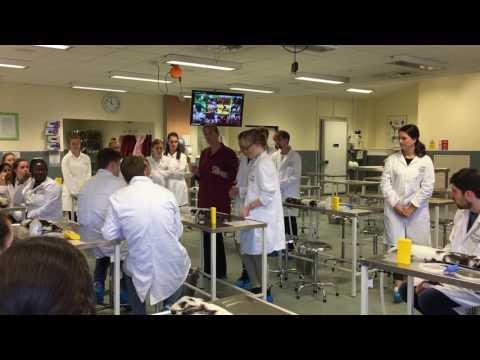 Farm vet skills training at the School of Veterinary Medicine and Science; Year 1, Wk2, Oct 2016