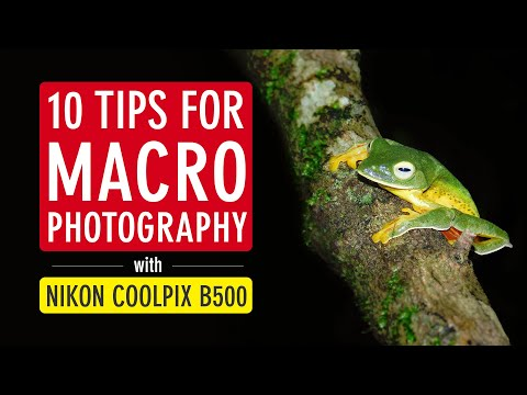 10 Tips for Macro Photography with Nikon Coolpix B500