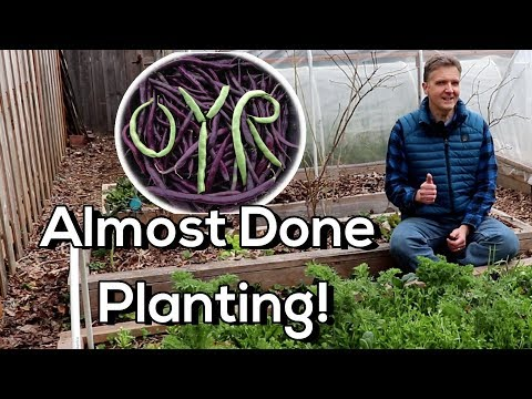 Planting Summer Crops Outside 3 Weeks B4 Last Frost! (Cucumbers, Summer Squash, Winter Squash)