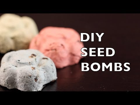How To Make Seed Bombs | Seed Balls | Craft Idea DIY