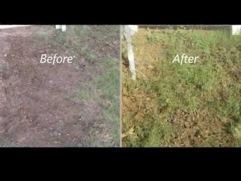 How to Fill lawn bare spot with Bermuda grass stolon - Easy way