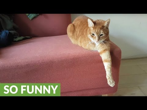 Owner not too happy with cat's favorite spot to relax