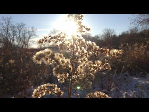 An Open Field in Winter - Quiet Moments