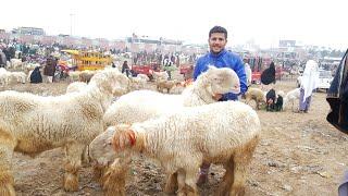 Nada farm Monday Dera Ghazi Khan mein Bakra Mandi Mundra