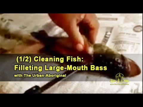 Cleaning Fish: Filleting Large-Mouth Bass (1/2)