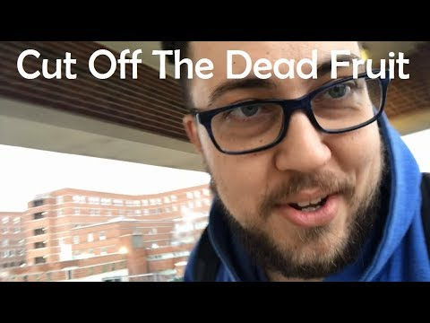 Cut Off The Dead Fruit