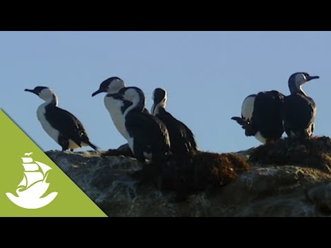 Seabird excrement helps the fish population survive