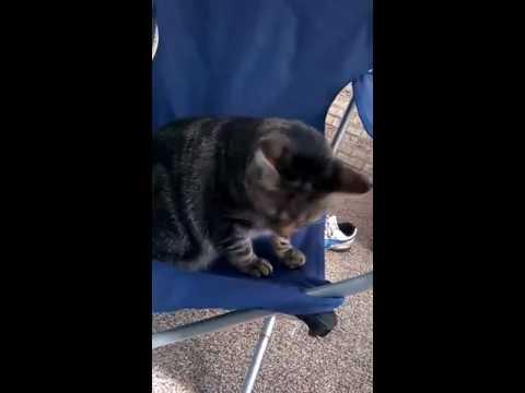 Dr Cat explore static electricity