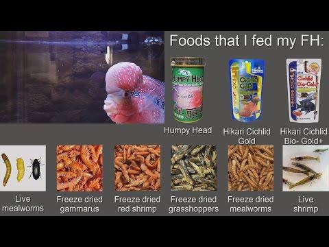 Flowerhorn Foods List