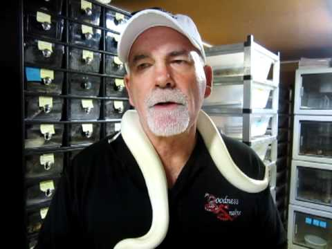 Brian Gundy Shares Technique For Breeding Ball Pythons
