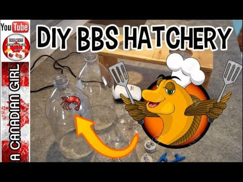 DIY BABY BRINE SHRIMP HATCHERY HOW TO INSTRUCTIONS