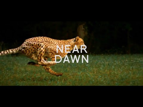 Dylan Stark - Near Dawn (Heartland LP) (Civil Music)
