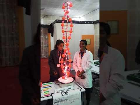 Working DNA Model........ by Watson & Crick