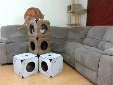 Cat Tower Boxes
