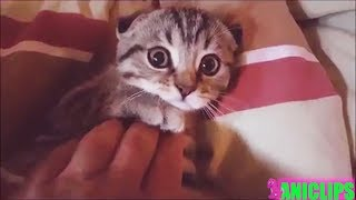 Best Of Funny And Cute Moments