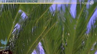 Pollice verde: le piante preistoriche